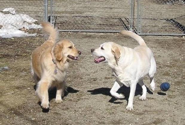 Dog boarding at Munster Abbey Kennels in Lewiston, ME area